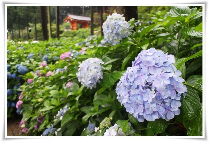 IMG_1514 2016-6-24日本.JPG