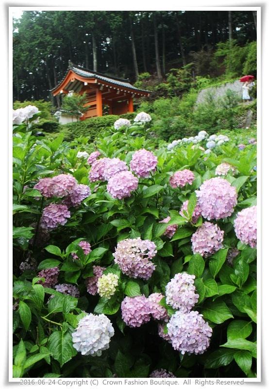 IMG_1528 2016-6-24日本.JPG