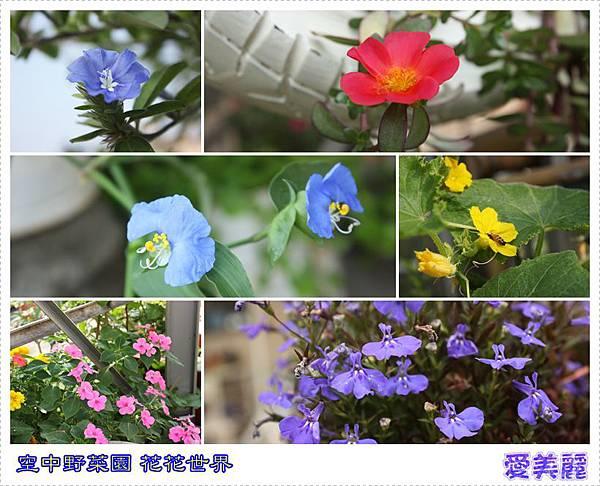 空中野菜園花花世界.jpg