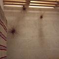 廁所天花板.JPG