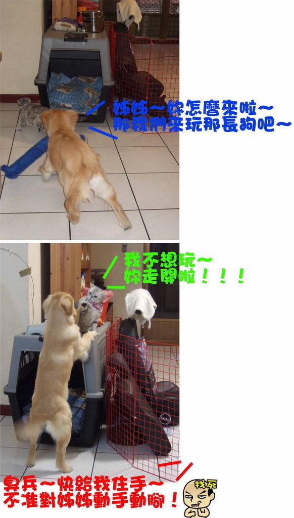大兵糾纏狗蛋-1.jpg