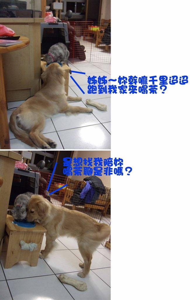 大兵糾纏狗蛋-3.jpg
