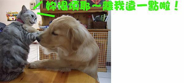 大兵糾纏狗蛋-6.jpg