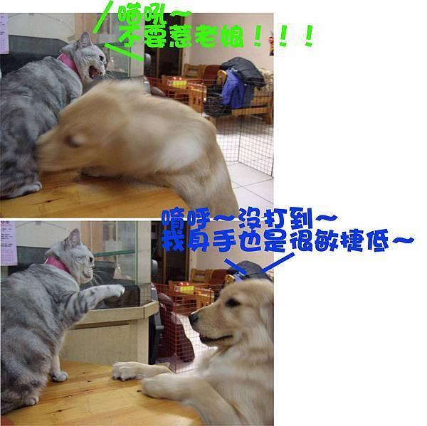 大兵糾纏狗蛋-8.jpg