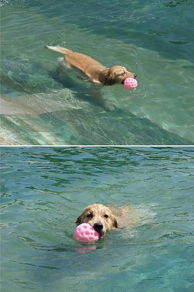 狗狗水世界-1.jpg