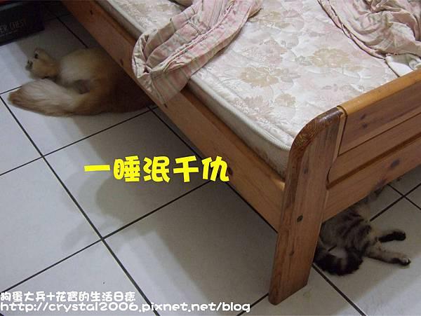 110711 狗蛋大兵一起睡.jpg