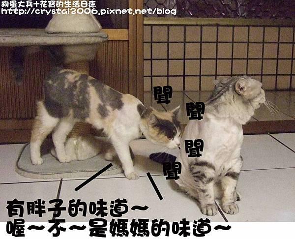 狗蛋花Q-胖瘦現形-5.jpg