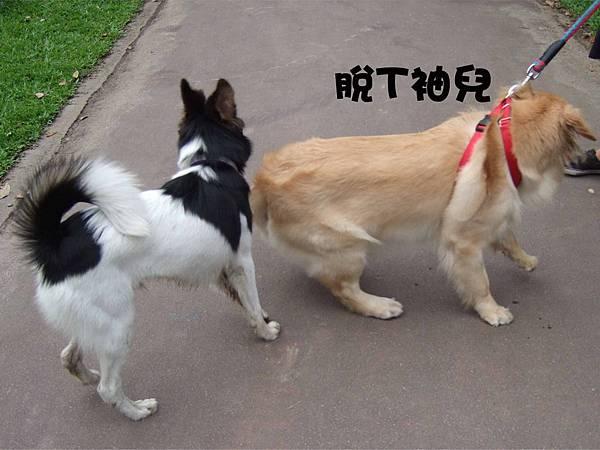 大兵的牽繩&項圈-7.jpg