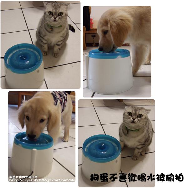 狗蛋大兵喝水.png