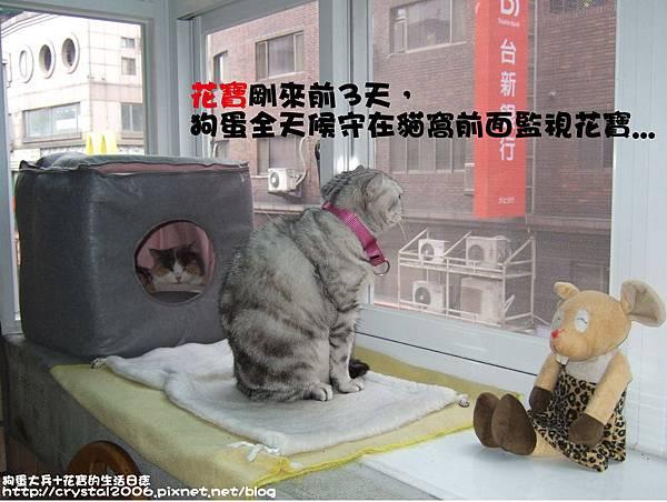 狗蛋監視花寶.jpg