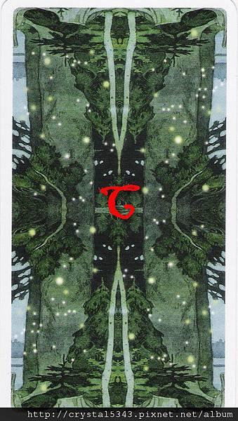 魔法森林牌背 C