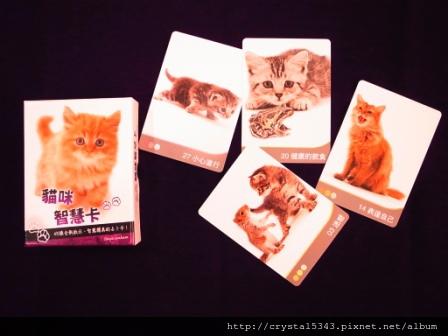 貓咪智慧卡