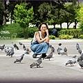 憲法廣場的鴿子與我