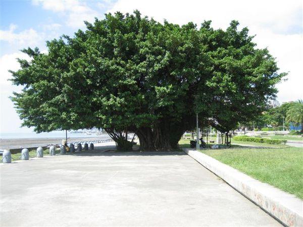 這棵樹超美的