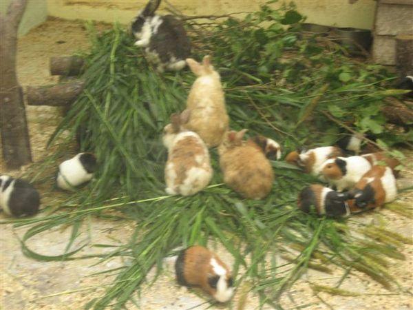 兔子和天竺鼠一家親阿~~