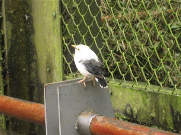 這小胖鳥還挺可愛的呢