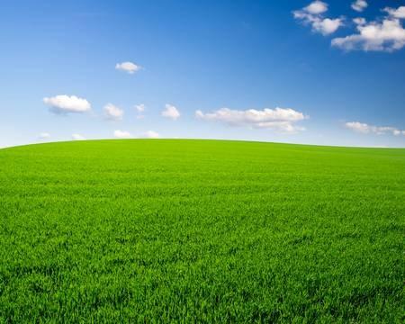 37912944-sky-and-grass-field-background.jpg