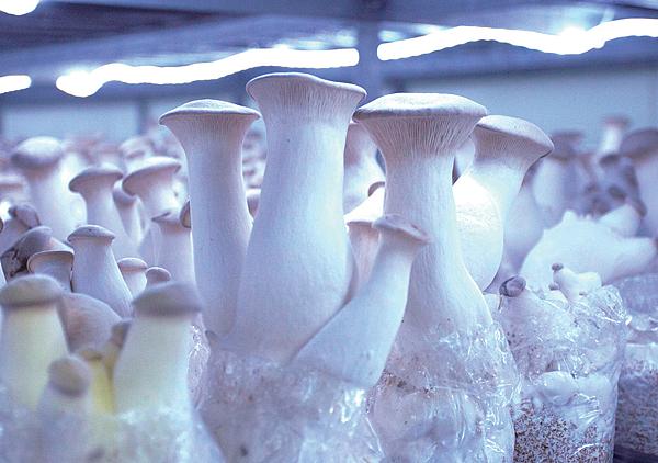 菇類生產合作社5