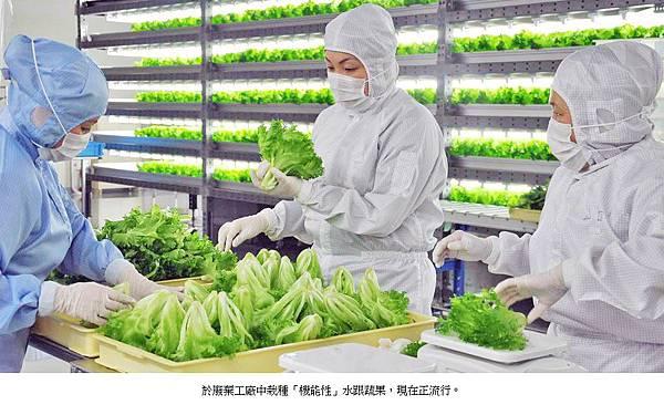 機能性蔬菜 (2)