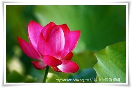 連花 (10)