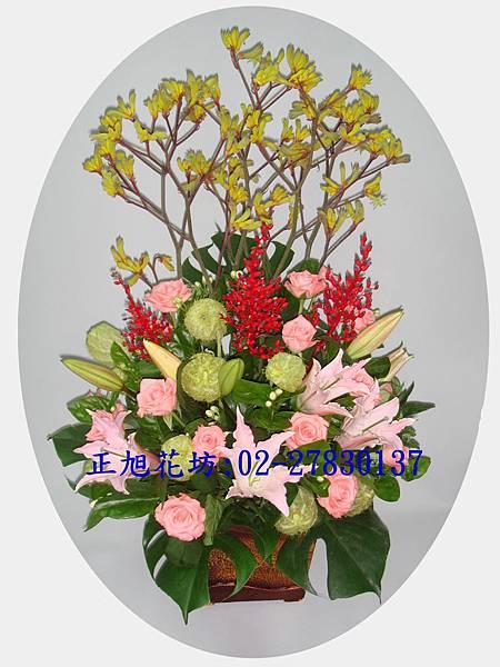 直式糖棉鹿角珊瑚草盆花.JPG