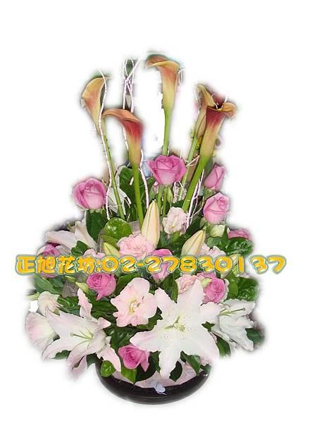 直式海芋浪漫盆花