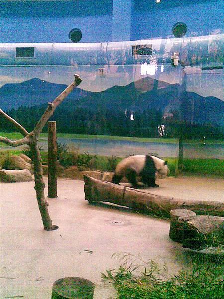 大熊貓.jpg