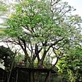 大樹平台.JPG