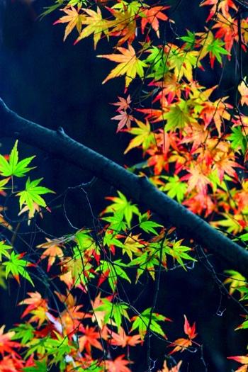 秋  心靈靜謐之美 (12)