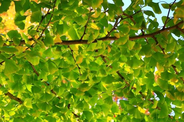 7喜歡秋分的季節_01