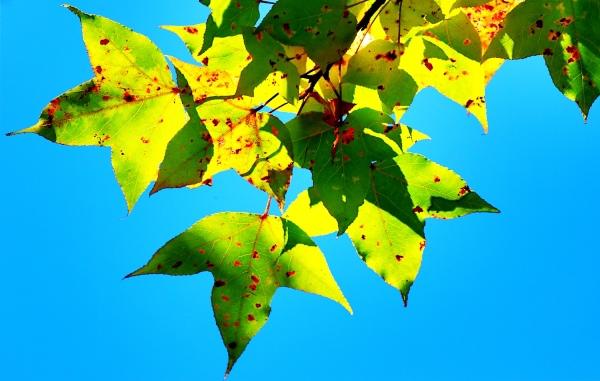 8喜歡秋分的季節_01