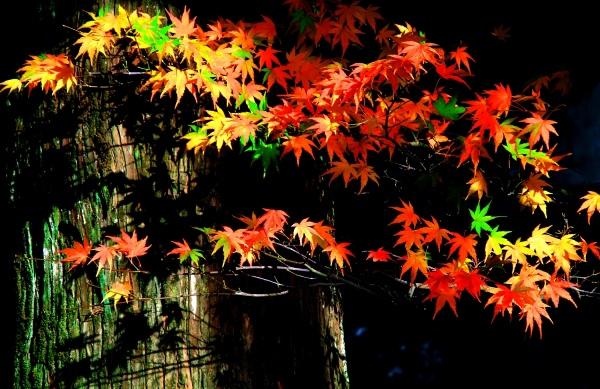 6喜歡秋分的季節 二_01