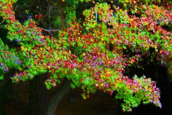 9喜歡秋分的季節二_01