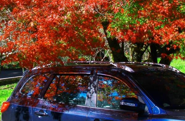 11喜歡秋分的季節 三
