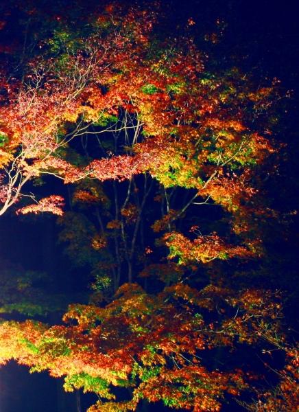 13喜歡秋分的季節 三