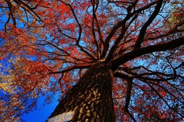 15喜歡秋分的季節 三