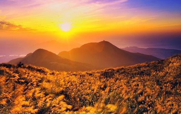 2陽明山上管芒花飄飛舞秋風