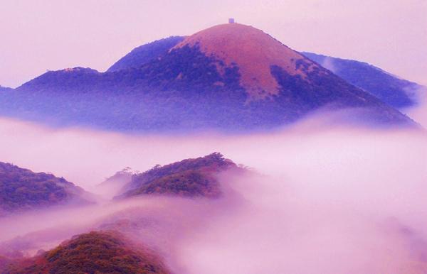 14陽明山上管芒花飄飛舞秋風
