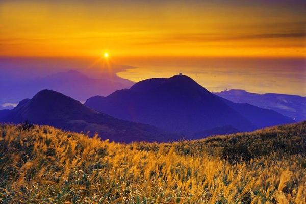 16陽明山上管芒花飄飛舞秋風