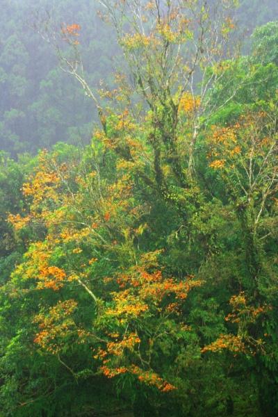 15明池楓紅意境幽邃之美