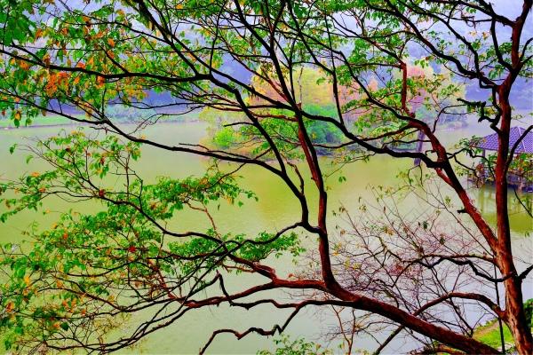6明池楓紅意境幽邃之美  二