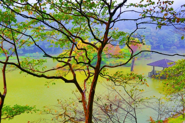8明池楓紅意境幽邃之美  二
