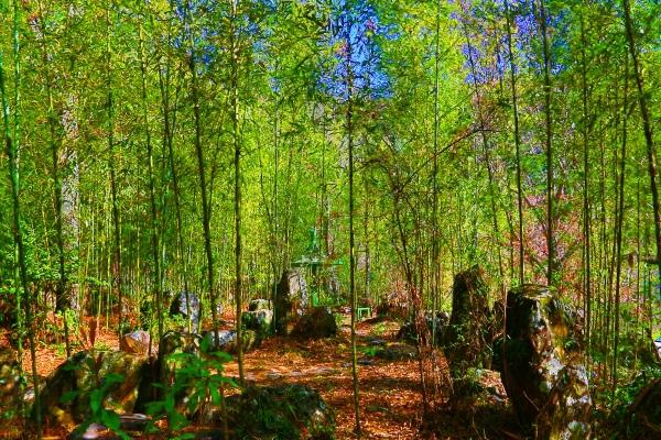 4竹林風韻之美 《一》