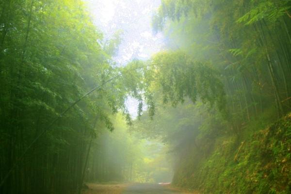 3竹林風韻之美 《一》