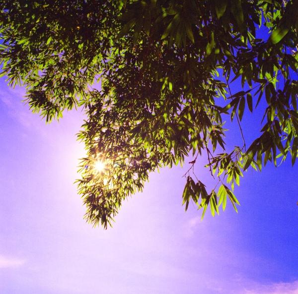 6竹林風韻之美 《一》