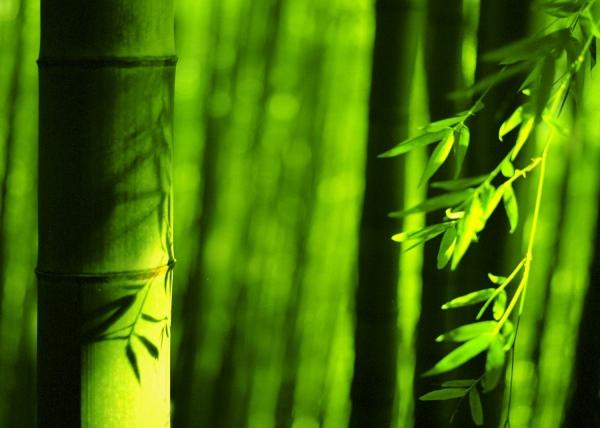7竹林風韻之美 《一》