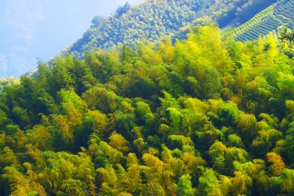 9竹林風韻之美 《一》