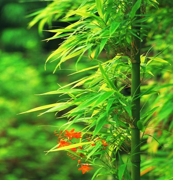 8竹林風韻之美 《一》
