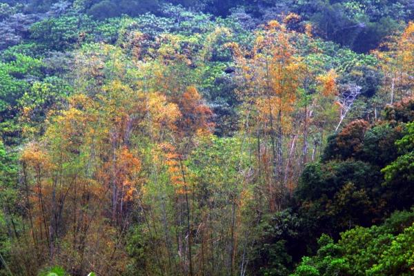 10竹林風韻之美 《一》
