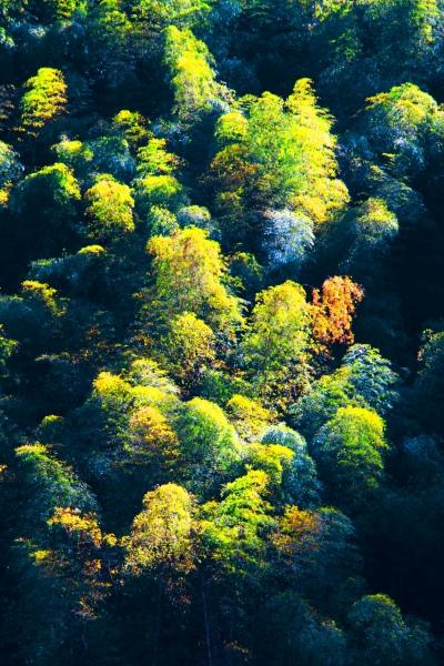 15竹林風韻之美 《一》